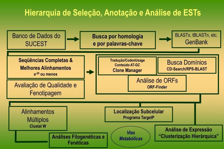 Hierarquia de Seleção, Anotação e Análise de ESTs