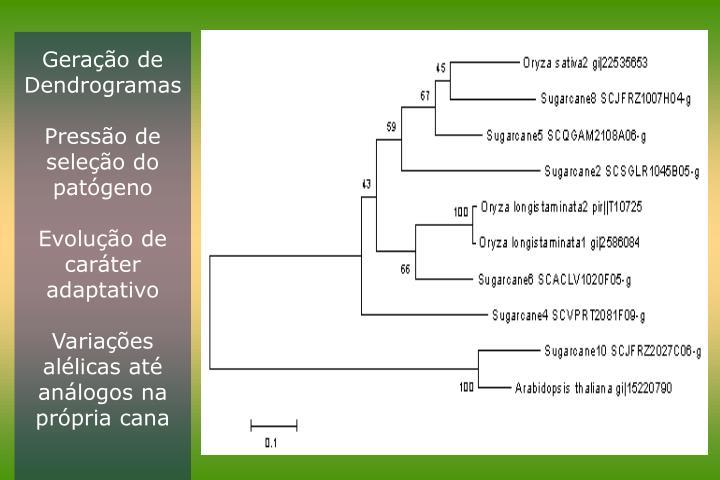 Geração de Dendrogramas