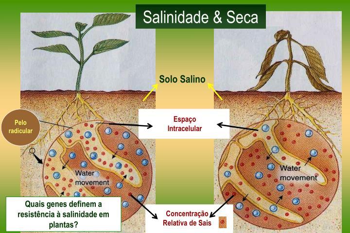 Salinidade & Seca