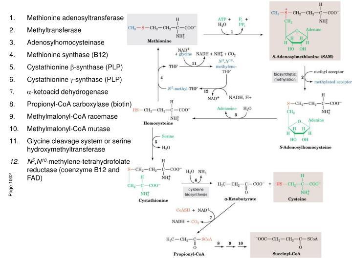 Methionine adenosyltransferase