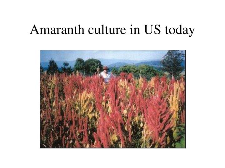Amaranth culture in US today