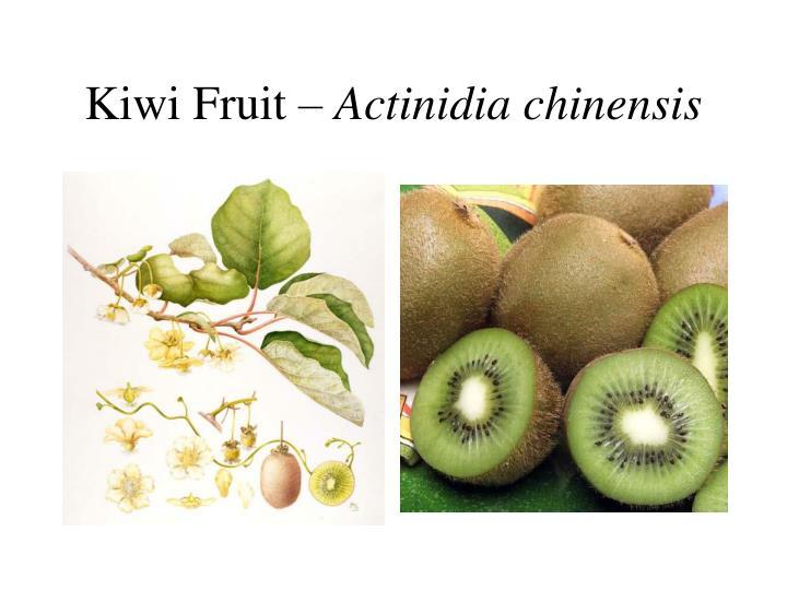 Kiwi Fruit –
