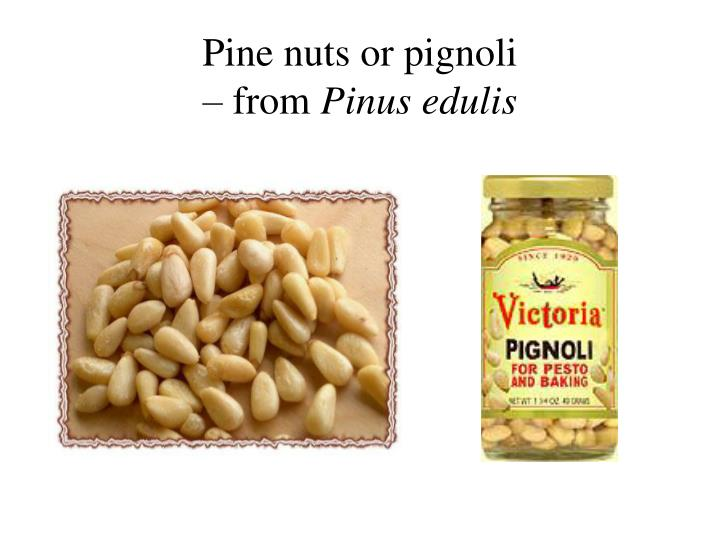 Pine nuts or pignoli