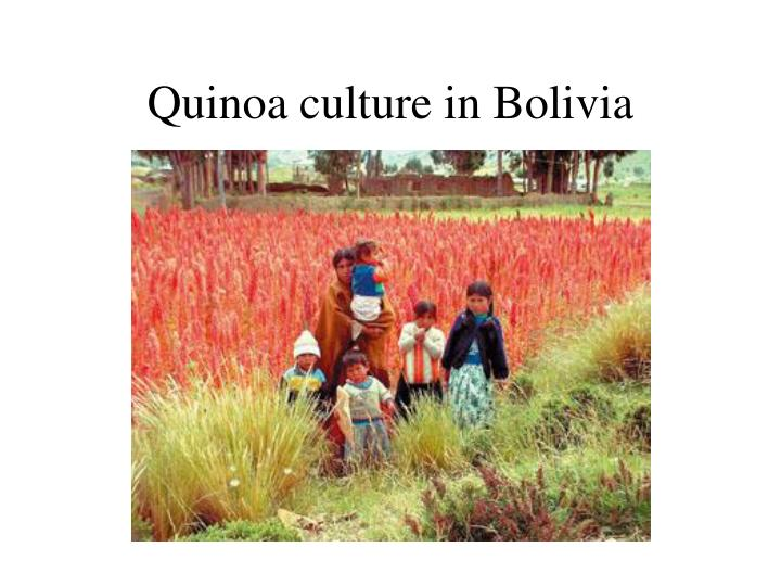 Quinoa culture in Bolivia
