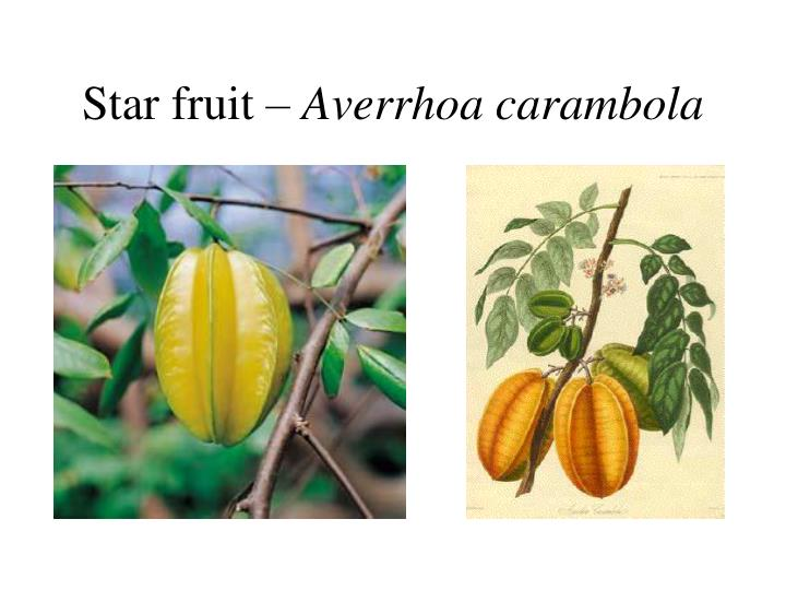 Star fruit –