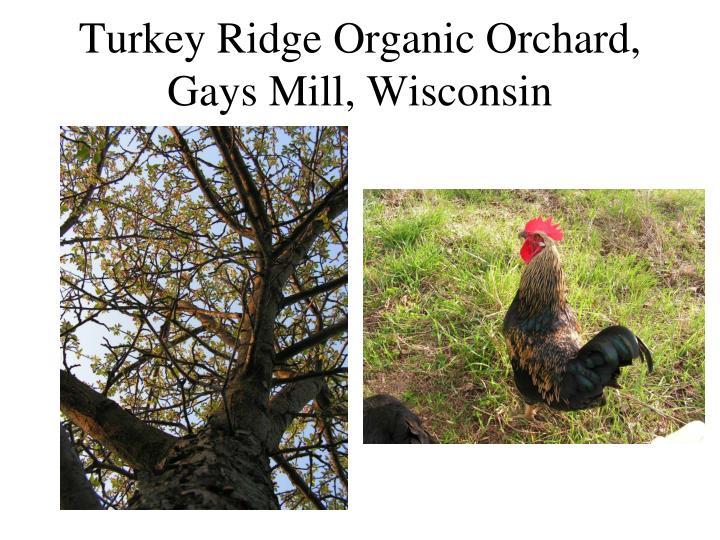 Turkey Ridge Organic Orchard, Gays Mill, Wisconsin