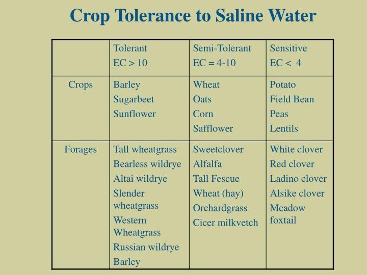 Crop Tolerance to Saline Water
