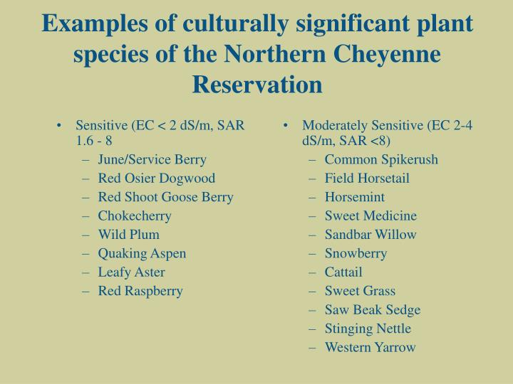 Examples of culturally significant plant species of the Northern Cheyenne Reservation
