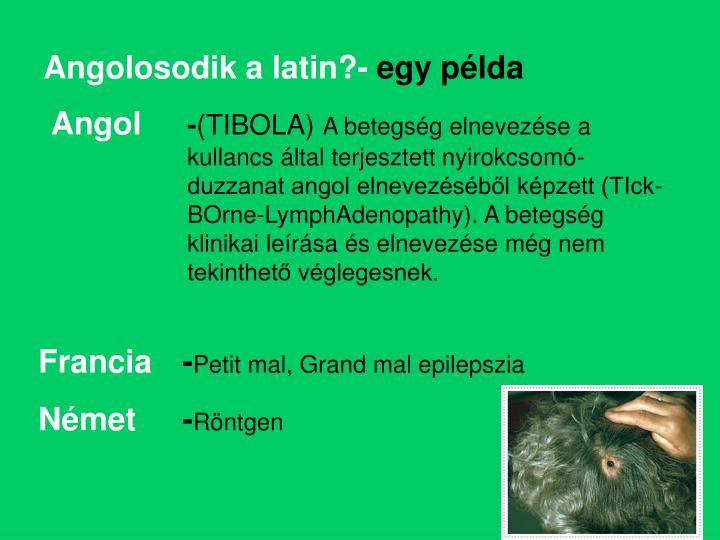 Angolosodik a latin?-