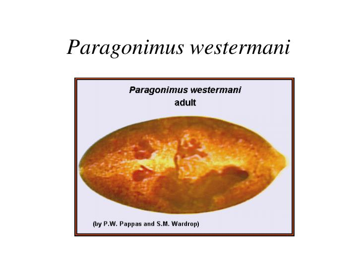 Paragonimus westermani