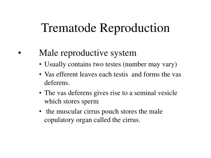 Trematode Reproduction