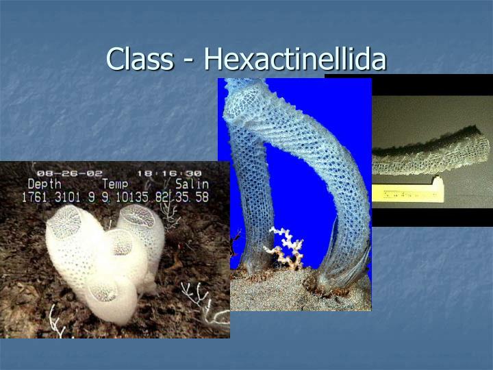 Class - Hexactinellida