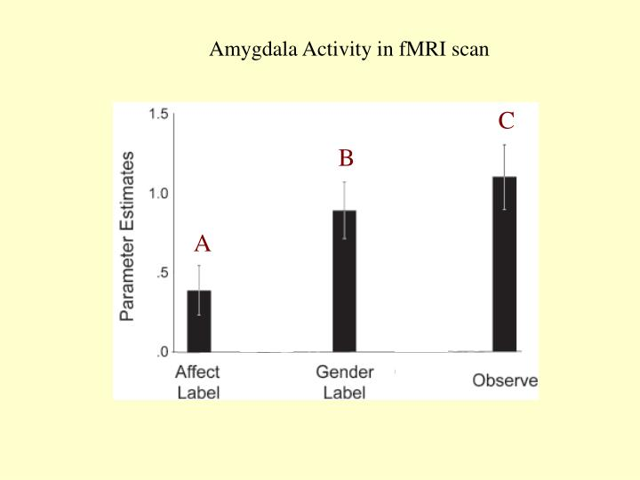 Amygdala Activity in fMRI scan
