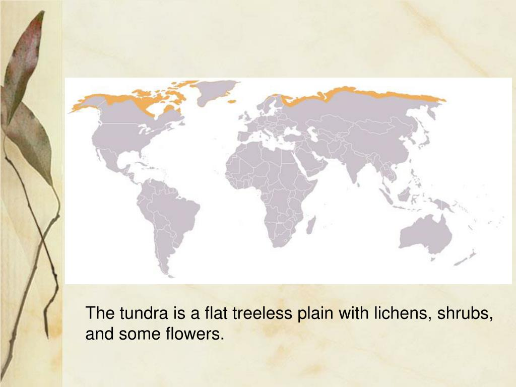 The tundra is a flat treeless plain with lichens, shrubs,