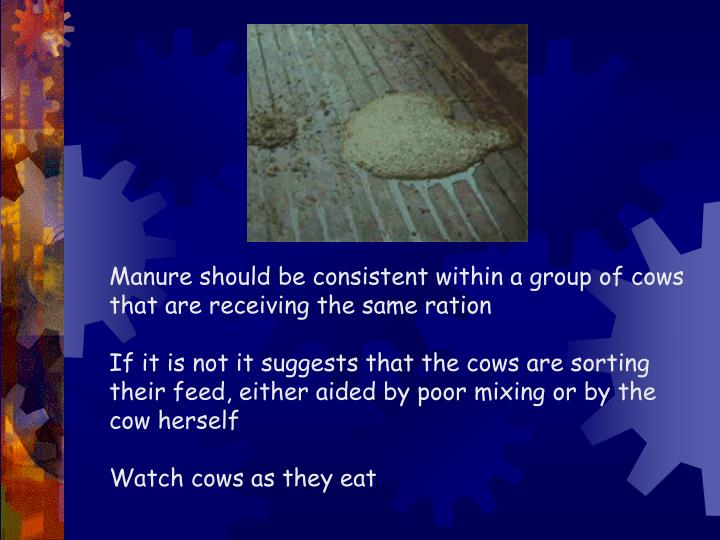 Manure should be consistent within a group of cows that are receiving the same ration