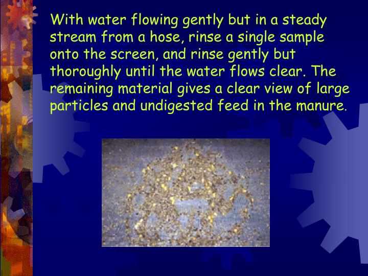 With water flowing gently but in a steady stream from a hose, rinse a single sample onto the screen, and rinse gently but thoroughly until the water flows clear. The remaining material gives a clear view of large particles and undigested feed in the manure