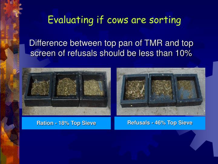 Evaluating if cows are sorting