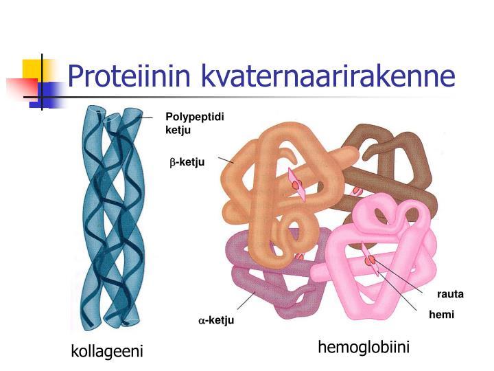 Proteiinin kvaternaarirakenne