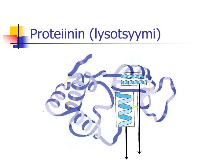Proteiinin (lysotsyymi)
