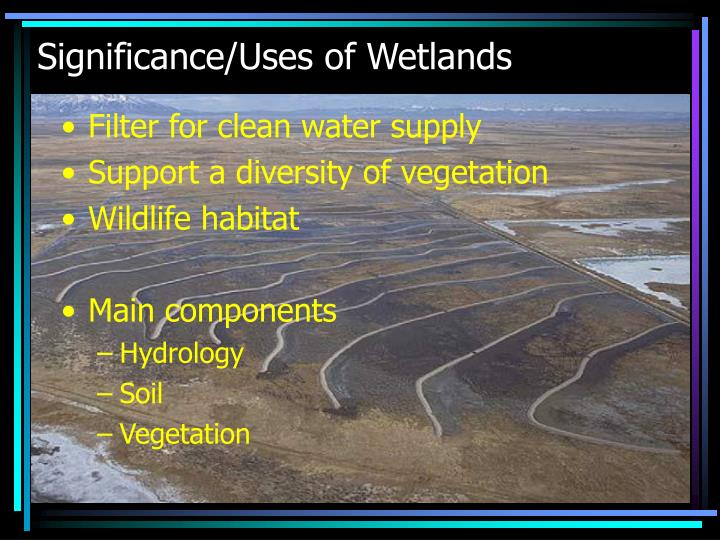 Significance uses of wetlands
