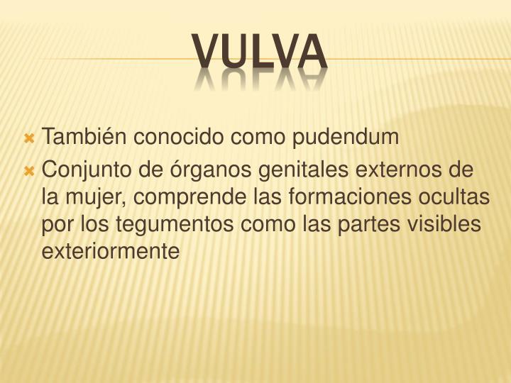 También conocido como pudendum