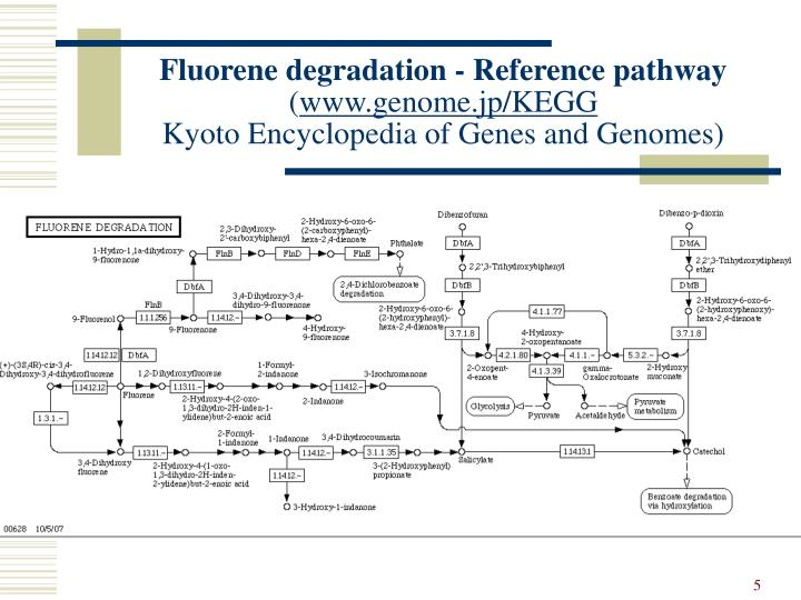 Fluorene degradation - Reference pathway