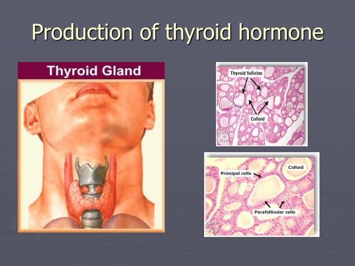 Production of thyroid hormone