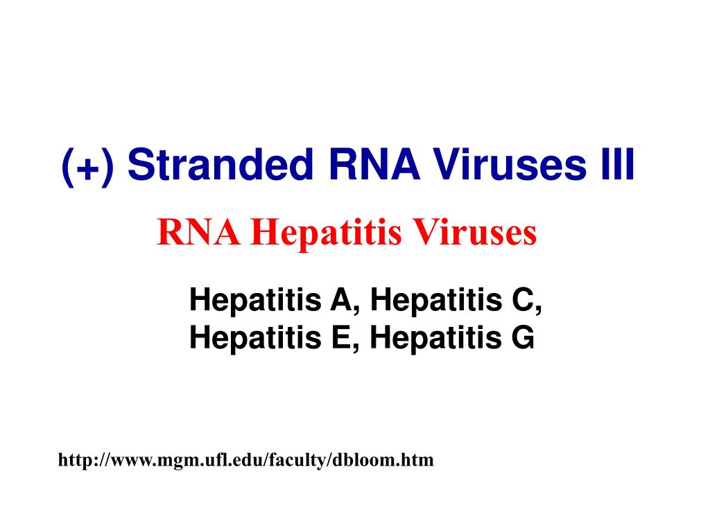 (+) Stranded RNA Viruses III