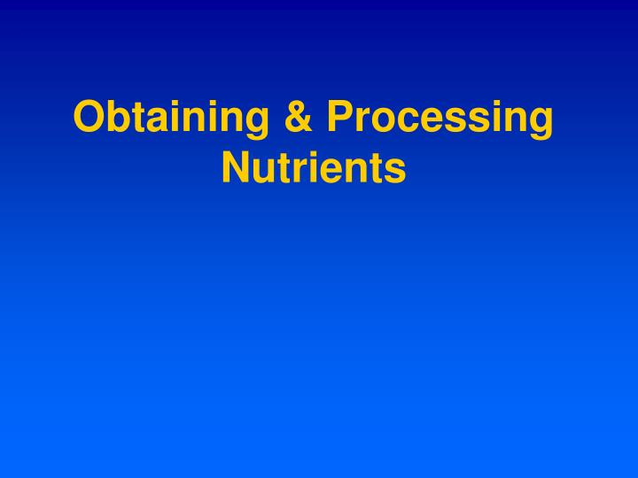 Obtaining & Processing Nutrients
