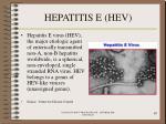 hepatitis e hev