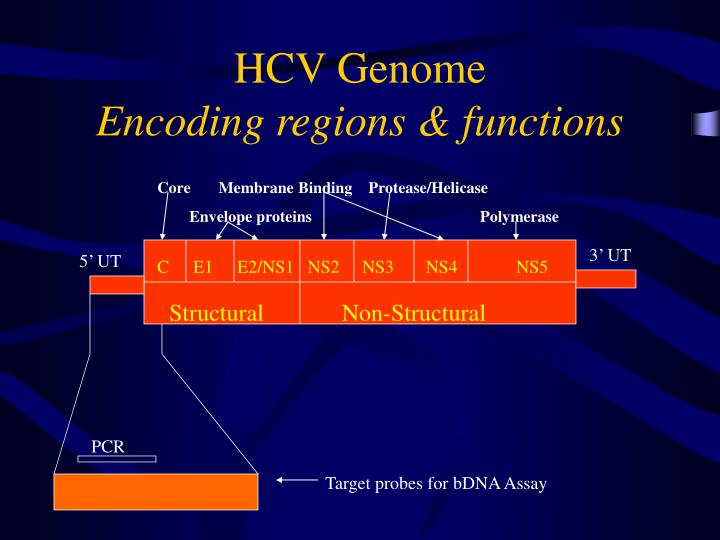 Hcv genome encoding regions functions