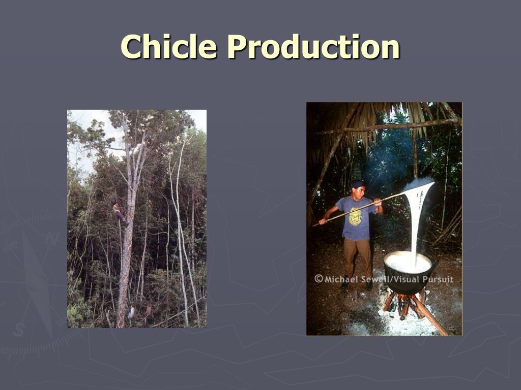 Chicle Production