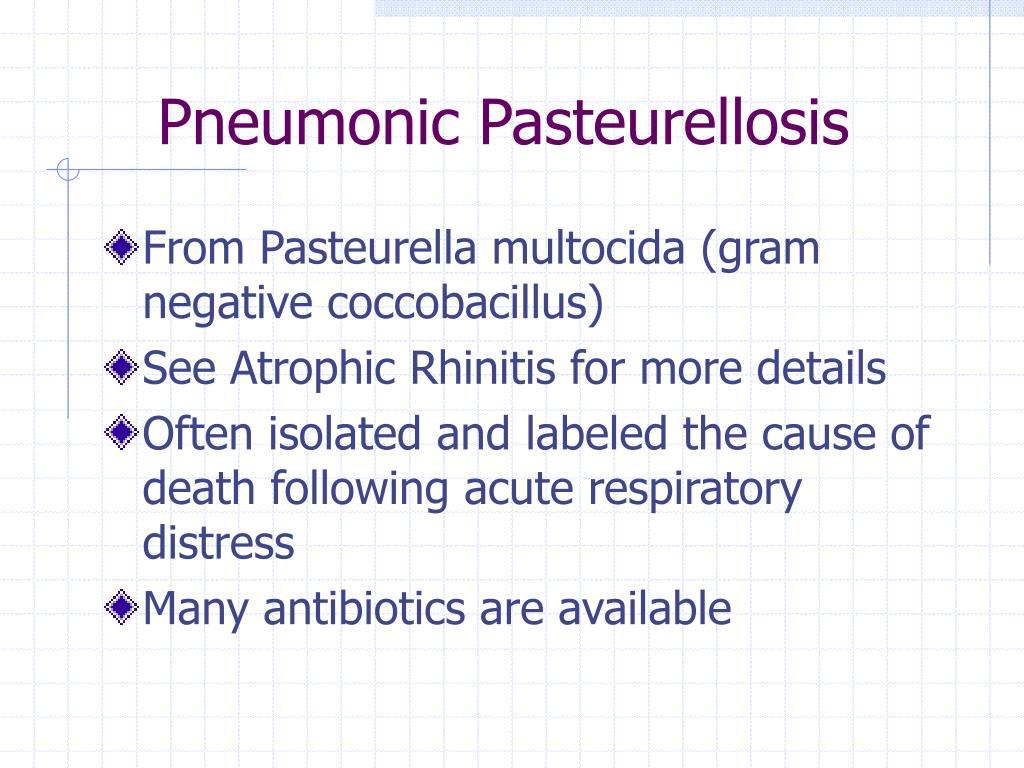 Pneumonic Pasteurellosis