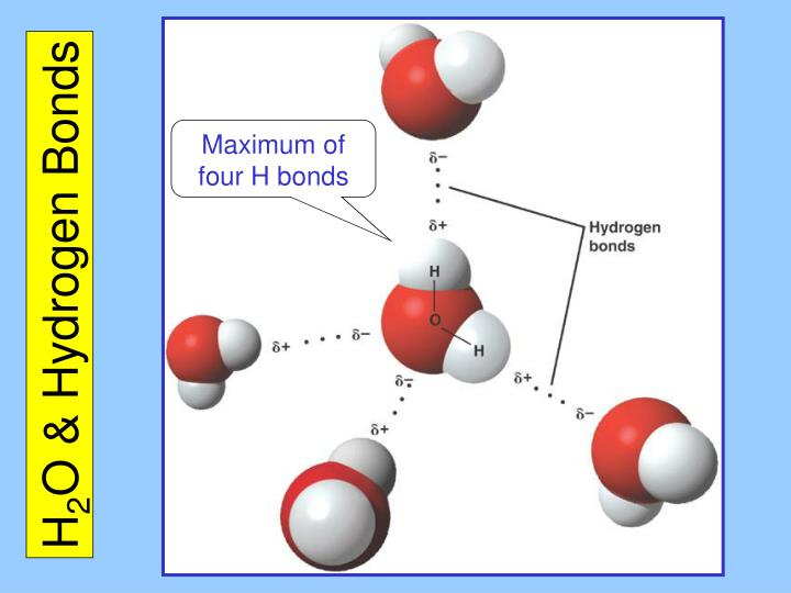Which molecules can form hydrogen bonds  Quora