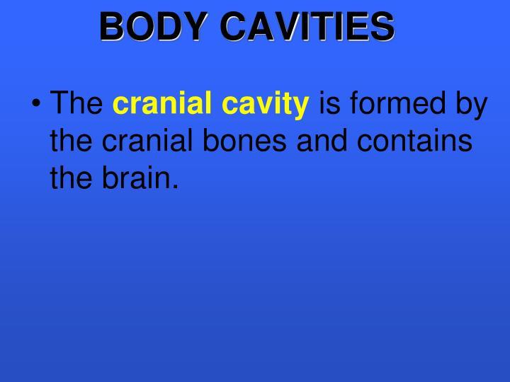 BODY CAVITIES