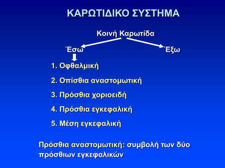 ΚΑΡΩΤΙΔΙΚΟ ΣΥΣΤΗΜΑ