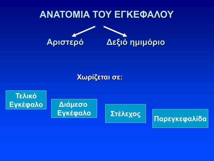 ΑΝΑΤΟΜΙΑ ΤΟΥ ΕΓΚΕΦΑΛΟΥ
