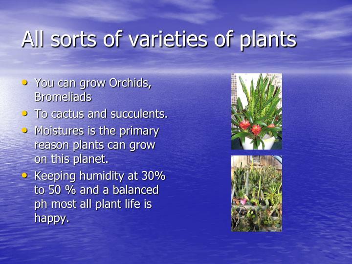 All sorts of varieties of plants