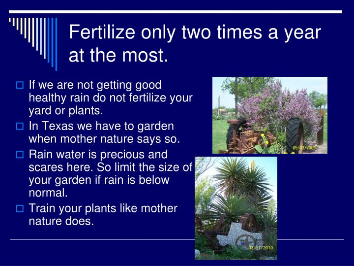 Fertilize only two times a year at the most.