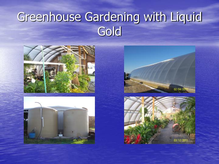 Greenhouse Gardening with Liquid Gold