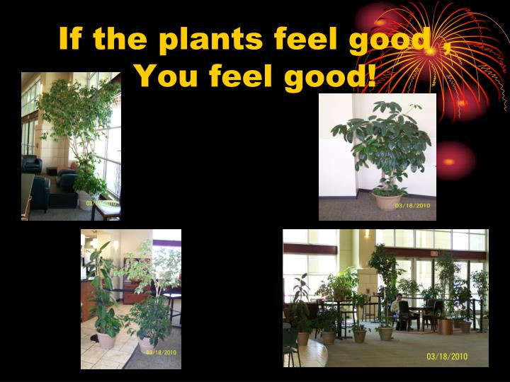 If the plants feel good ,