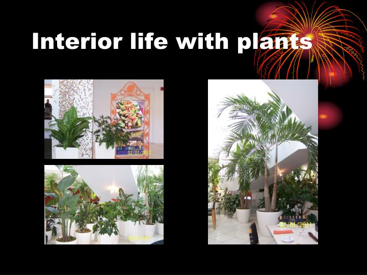 Interior life with plants