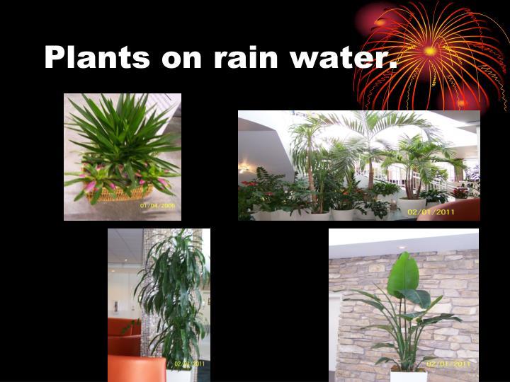 Plants on rain water.