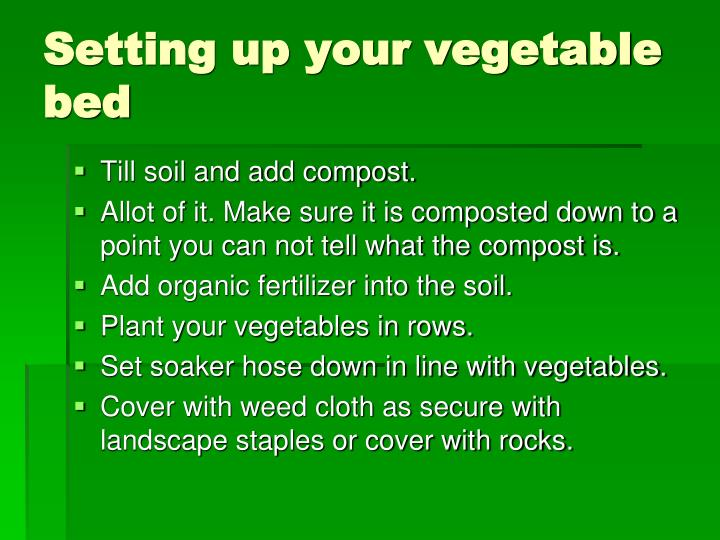 Setting up your vegetable bed