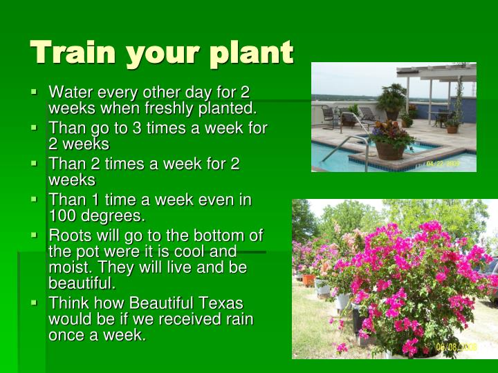 Train your plant