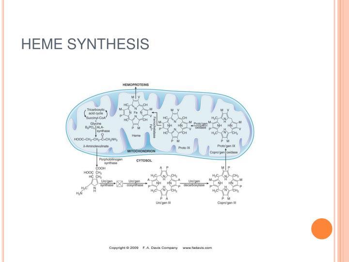 http://image.slideserve.com/797586/heme-synthesis-n.jpg