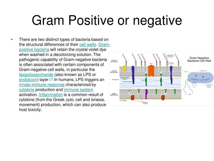 Gram Positive or negative
