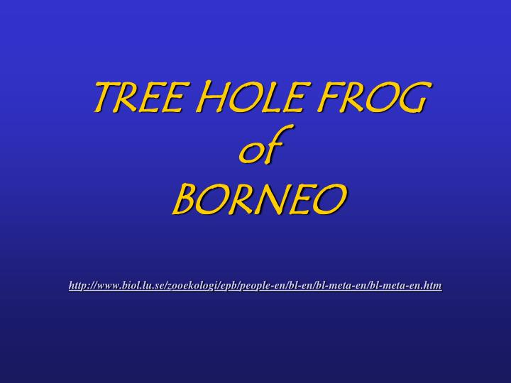 TREE HOLE FROG