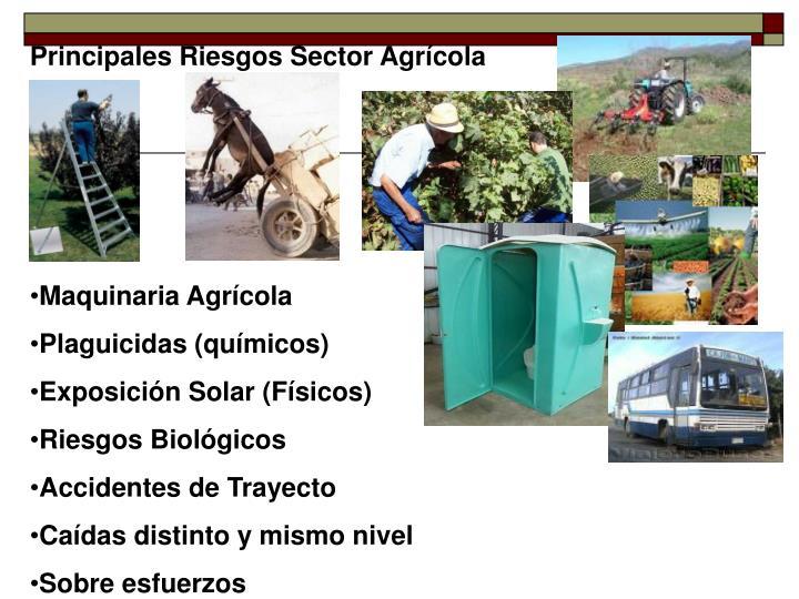 Principales Riesgos Sector Agrícola