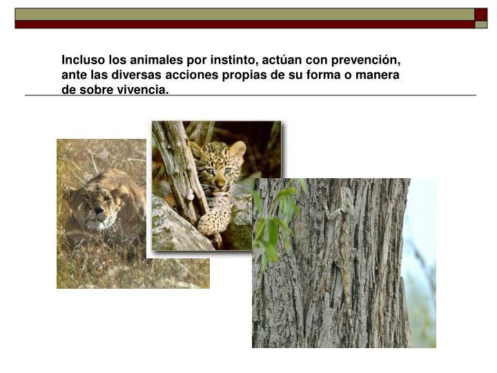 Incluso los animales por instinto, actúan con prevención, ante las diversas acciones propias de su forma o manera de sobre vivencia.